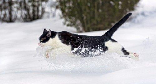 Котэ и снег (20 фото)