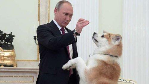 Владимир Путин-царь зверей (14 фото)