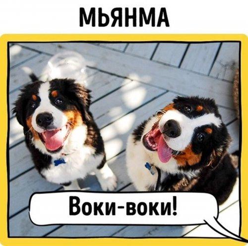 Как лают собаки в разных странах мира (11 фото)