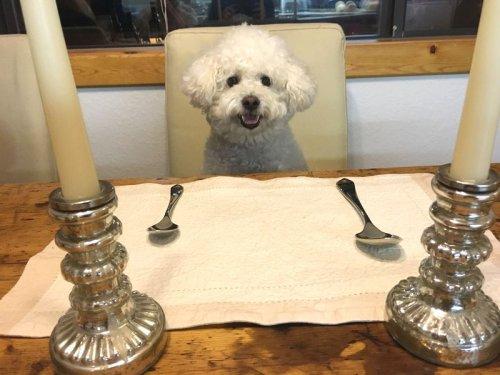 В чём секрет собачьей преданности?