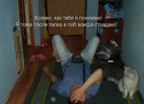 Котоматричные картинки (25 фото)