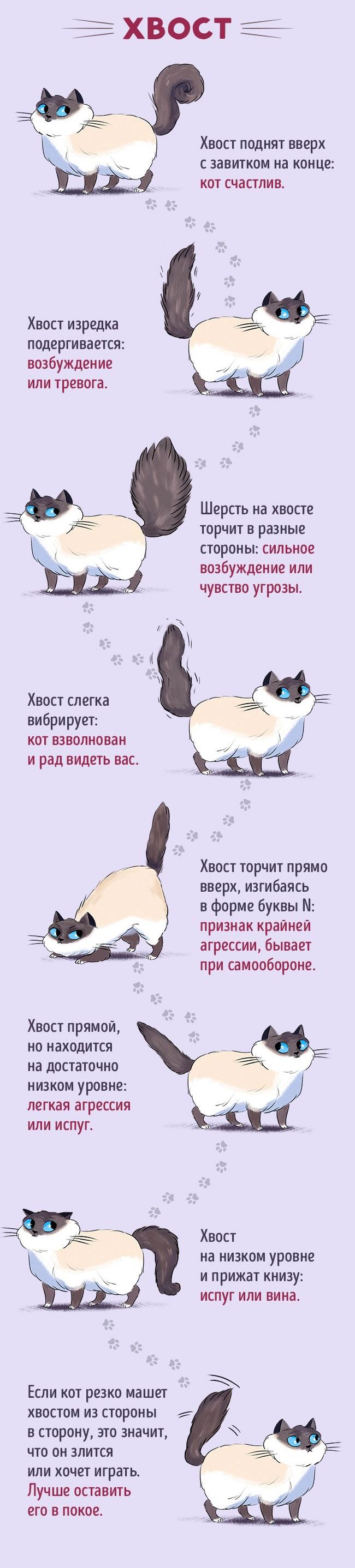 Это интересно : Как найти общий язык со своим котом