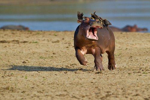 Забавные животные, попавшие в казусные ситуации (25 фото)