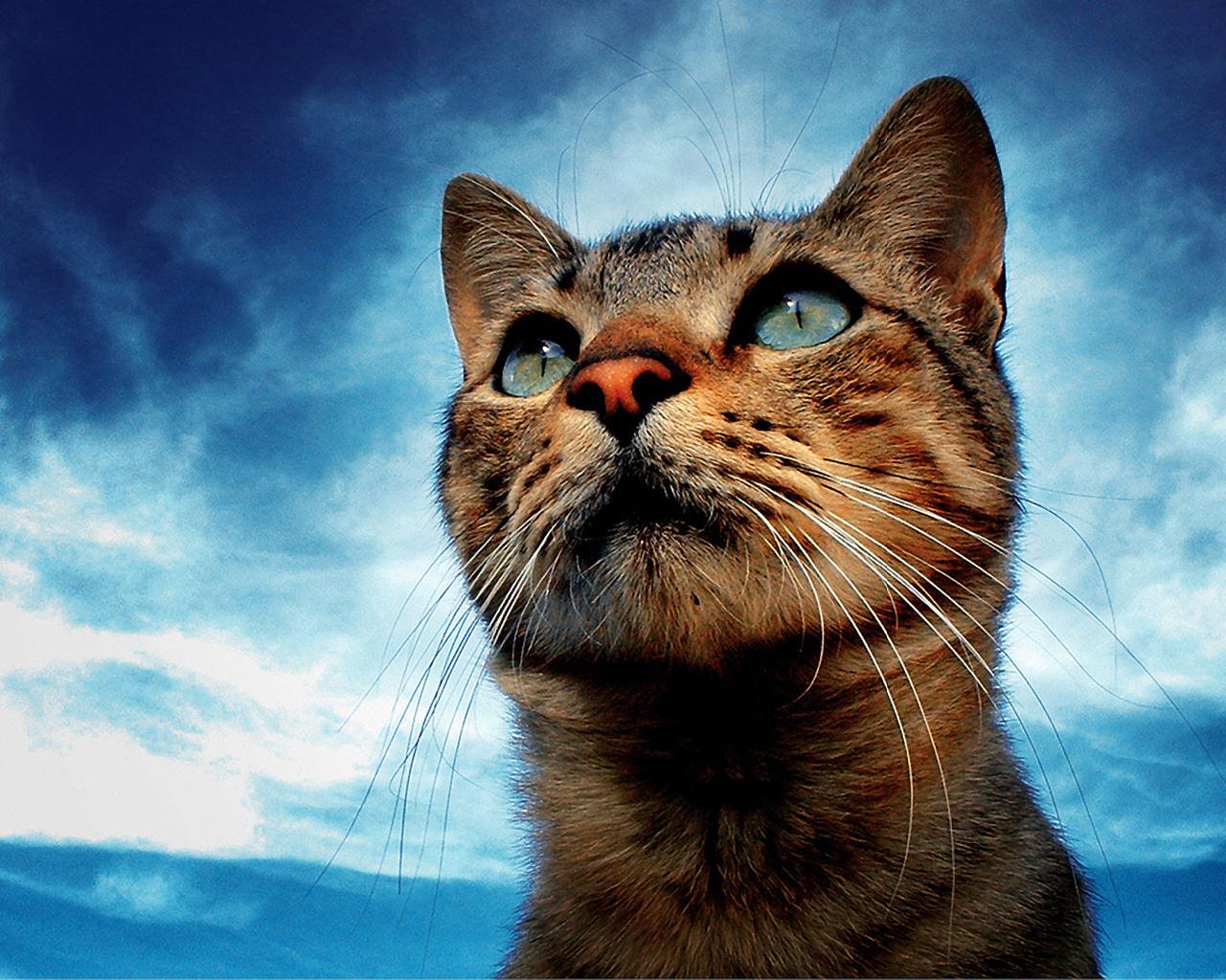 Картинки про кошек крутые