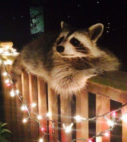 Забавные и милые животные (30 фото)