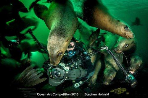Лучшие подводные фотографии 2016 года (18 фото)
