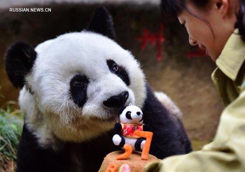 Самая старая панда в мире отпраздновала день рождения (10 фото)
