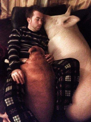 Чудо-свинка:) (10 фото)