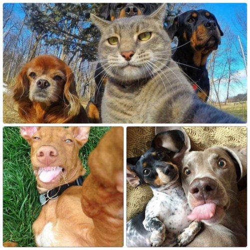 Прикольные селфи с животными (40 фото)