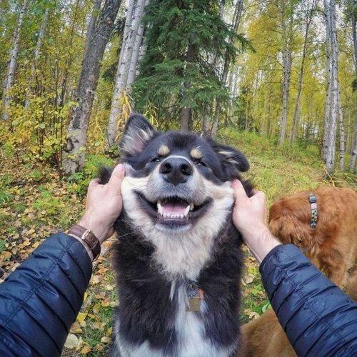 Милейшие любимцы стоматолога из Аляски (20 фото)