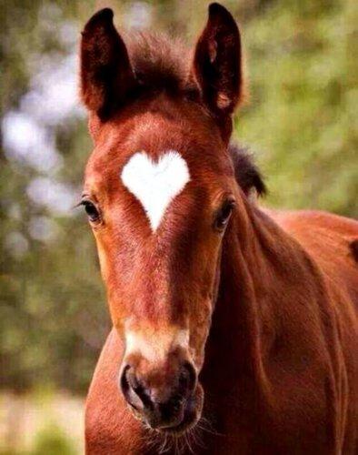 Животные с сердечками (5 фото)