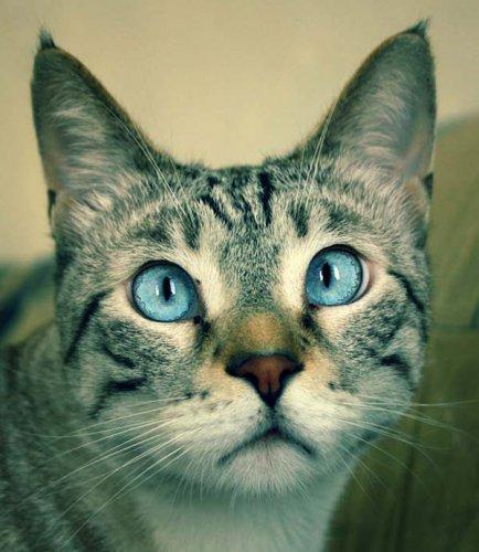 Забавные и очаровательные котейки (40 фото)