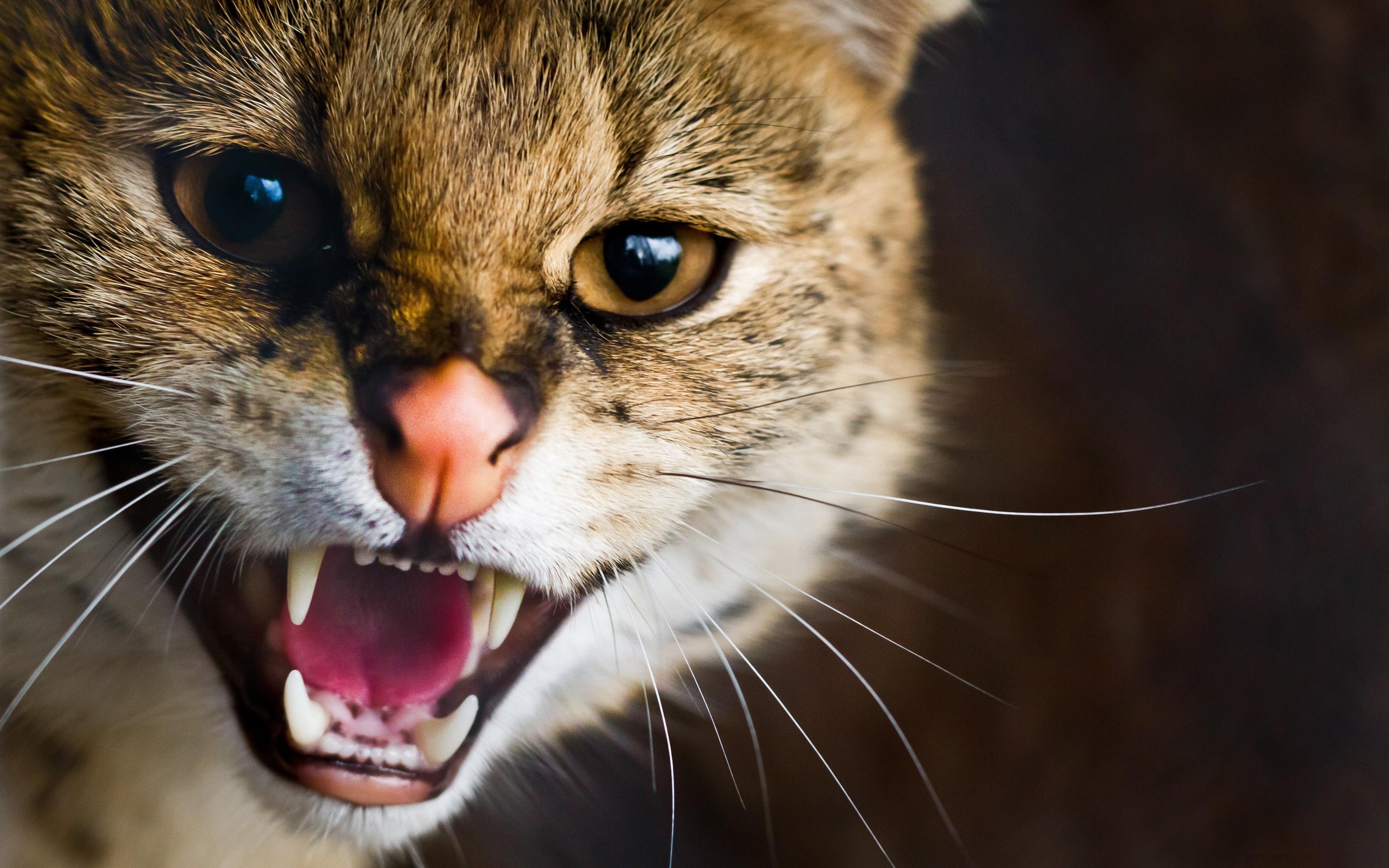 сонник яркий кот рычит игры