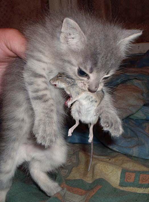 Поздравления, картинки с приколами про кошек и мышей