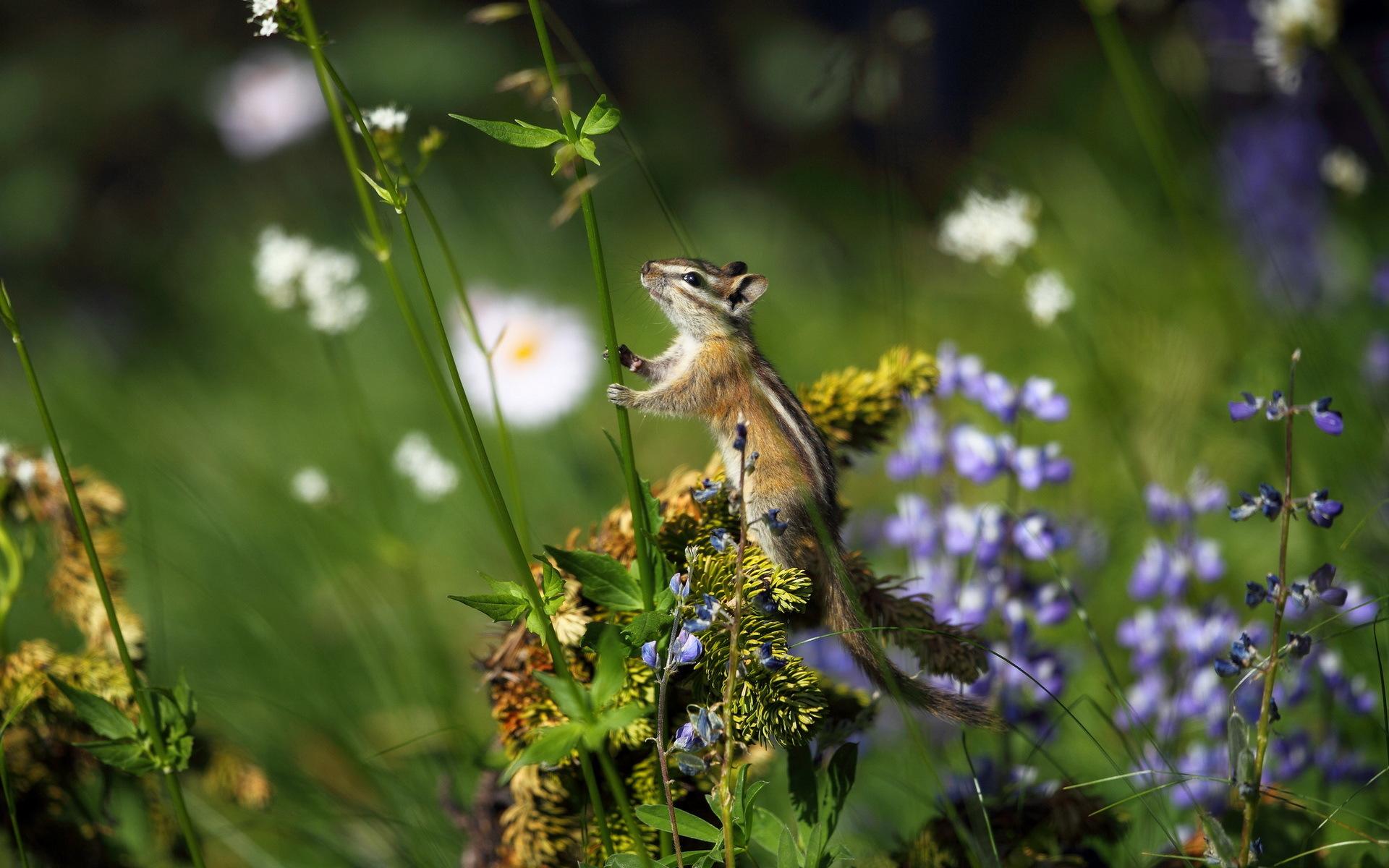 Картинки лето животные растения