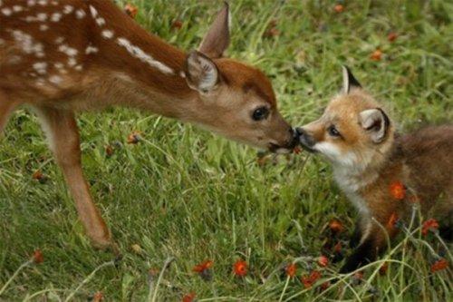 Любовь и дружба между животными разных видов (24 фото)
