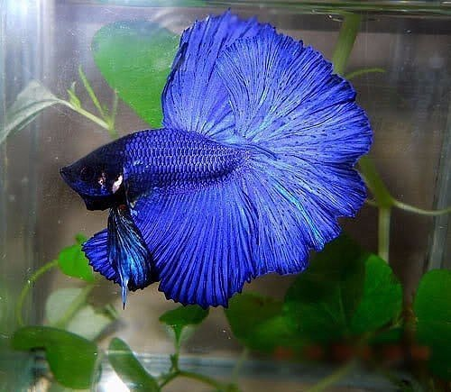 Рыба-бабочка (7 фото)