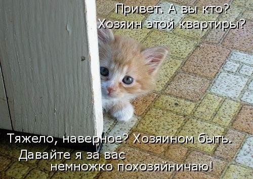 Забавная котоматрица (30 фото)