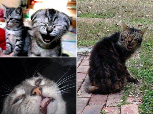 Будьте здоровы кошечки:) (16 фото)