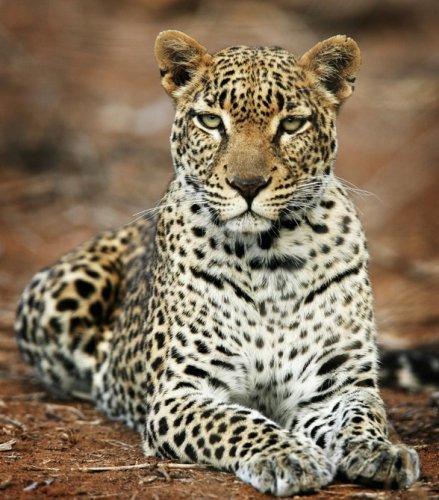 Африкансие животные (20 фото)