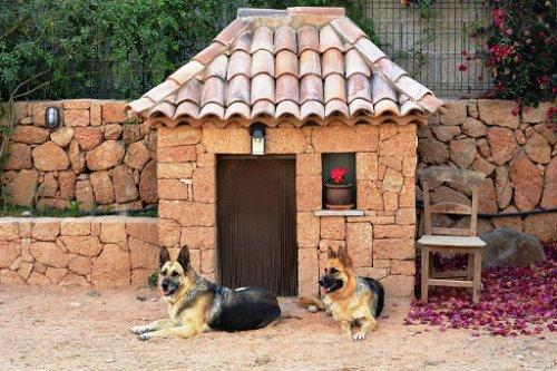 Домики для наших любимцев (25 фото)