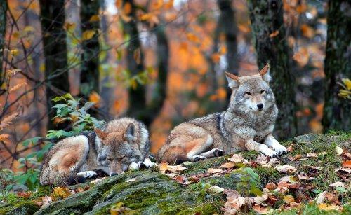 Красивые фотографии из мира животных (42 фото)