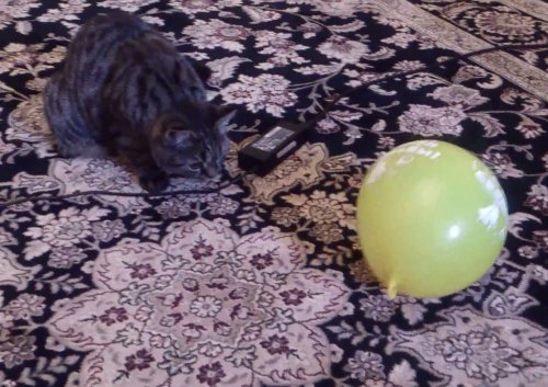 Мила и шарик (видео)