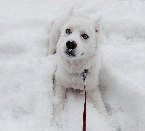 Зимние эмоции животных (26 фото)