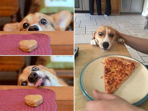 Ох уж эти голодные глаза:) (10 фото)