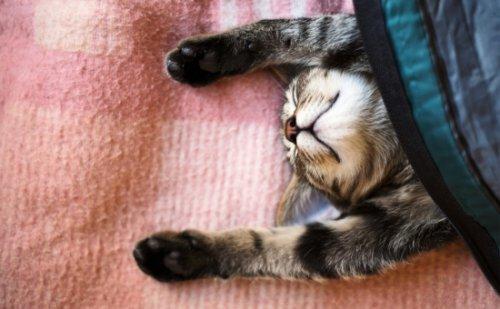 Оказывается, существует всего 5 типов кошачьих характеров
