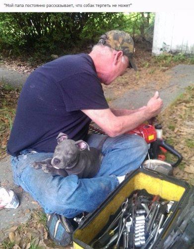 Юмор : Отцы, которые запрещали заводить дома собаку (10 фото)