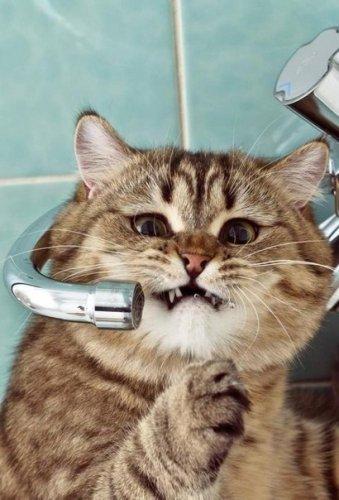 Котик очень хочет пить:) (5 фото)