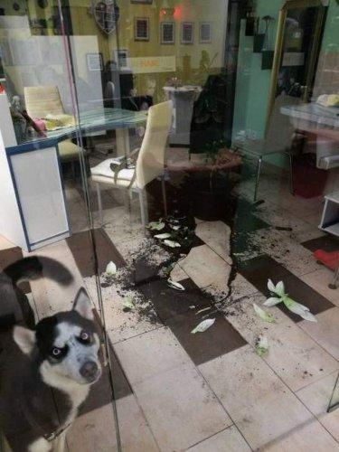 Смешные и очаровательные собаки (25 фото)