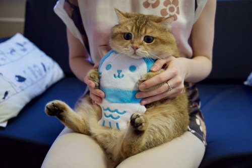 Очаровательный котик Хосико (23 фото)