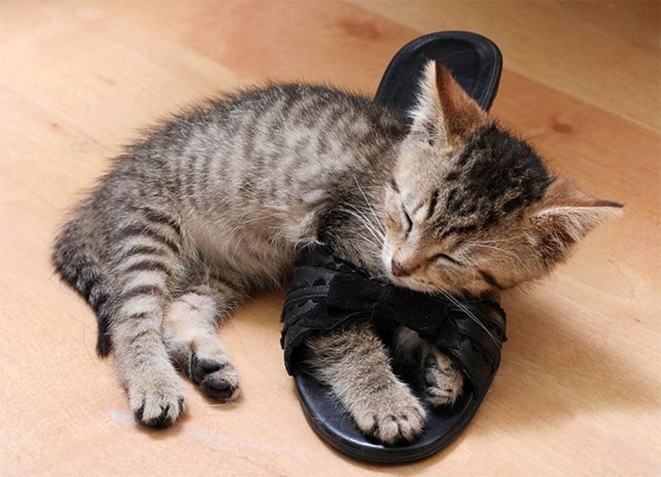 смешные кошки коты и котята фото материал