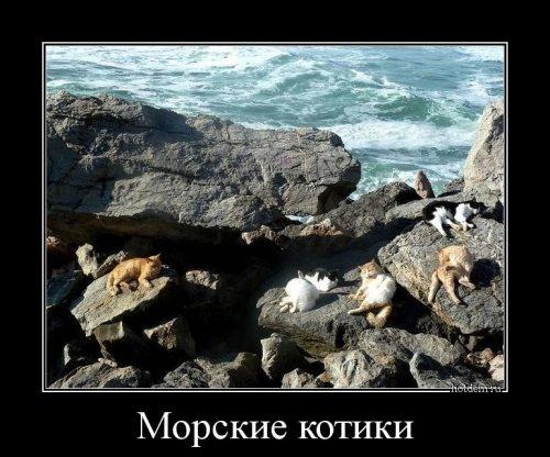 Коллекция прикольных демотиваторов (30 фото)