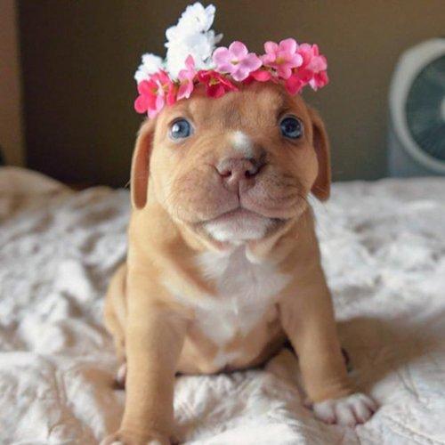 Очаровательные щенята (30 фото)