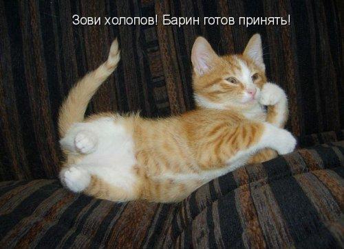 Котоматрица на радость! (25 фото)