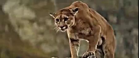 Из жизни диких животных