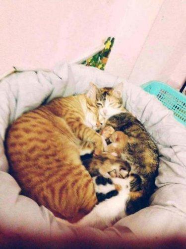Крепкая кошачья семья (7 фото)