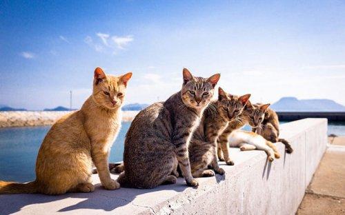 Юмор : Фото животных, которые думают, что фотографируются для обложки музыкального альбома