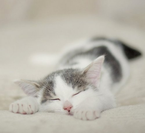 Кото-терапия. Спящие котики. (40 фото)