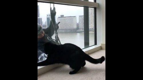 Юмор: Кот, который действительно наслаждается мытьём окон