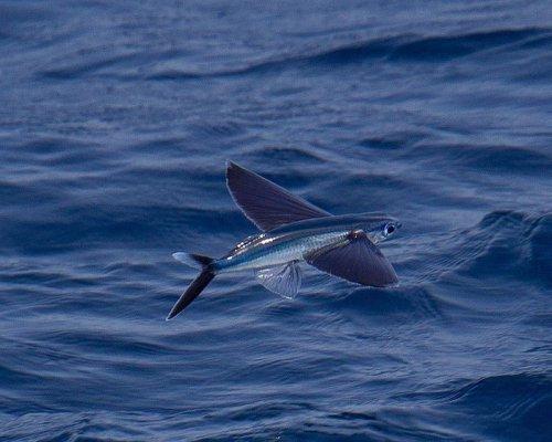 Летающие рыбки (6 фото+видео)
