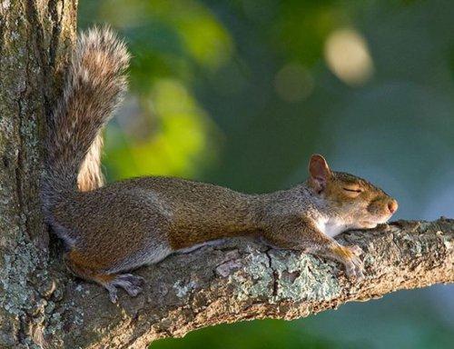 Спят уставшие зверушки (35 фото)