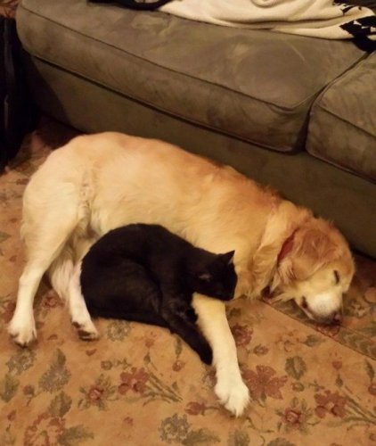 10 котов,которые любят собак.