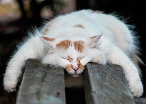 Мимишные фотографии спящих мурлык (30 фото)