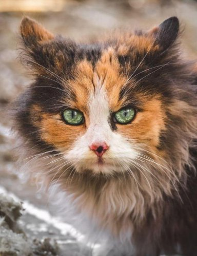 Бездомные кошки Вильнюса (11 фото)