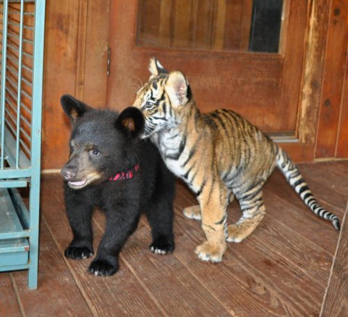 Смешные животные (35 фото)