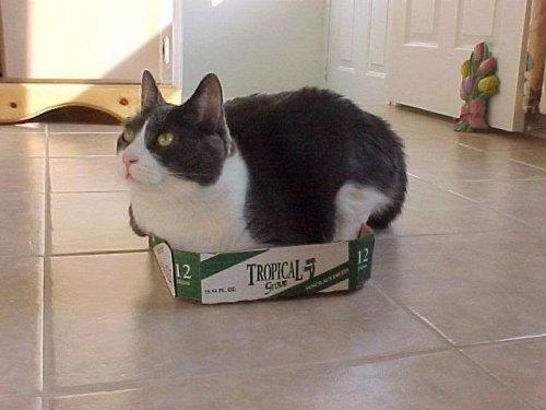 Юмор : Коты в коробке (10 фото)